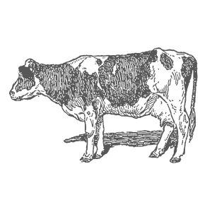 Beef, Sudbury, Suffolk, Jamies Meat Inn